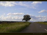 I'm on the road again... by fogz, Photography->Landscape gallery