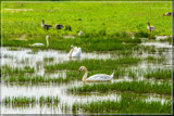 Wetlands Paradise by corngrowth, photography->birds gallery