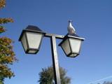 A closer Tern by rws1943, Photography->Birds gallery