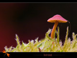 restrained by kodo34, Photography->Mushrooms gallery