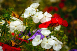 Flowers by Eubeen, photography->flowers gallery