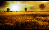 Fields Of Gold by Phil2001, Photography->Sunset/Rise gallery