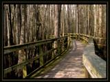 sidewalk through the swamp by jeenie11, Photography->Landscape gallery