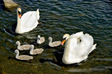 Proud by biffobear, Photography->Birds gallery