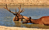 Bath Day by Jimbobedsel, photography->animals gallery