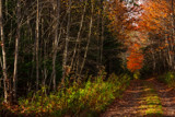 New Trail by Eubeen, photography->landscape gallery