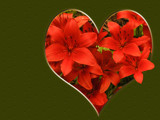 Red Lily Heart by wheedance, Holidays gallery