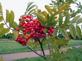 a berry nice plant by the_runcorn_womble, photography->general gallery