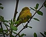 Bird # 38 by picardroe, photography->birds gallery