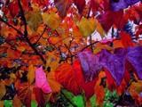 Image: Colors...