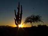 Sahuaro Sunset by rawtsn, Photography->Sunset/Rise gallery