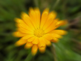 Flower by rvdb, photography->manipulation gallery