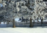 Sunny, but Frosty by Starglow, photography->landscape gallery