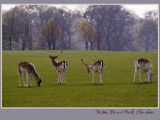 Deer Park, Tatton.......... by fogz, Photography->Animals gallery