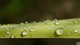 Rework Rain Drops by Skynet5, Photography->Macro gallery