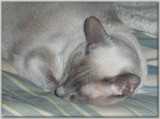 Farewell My Katia - I'll Truly Miss You by icedancer, photography->pets gallery