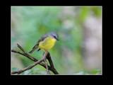 Robin by trisbert