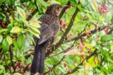 Bird by twinkel, photography->birds gallery