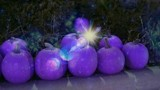 Image: Enchanted Pumpkins