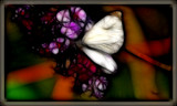 Butterfly on a Butterfly Bush by vangoughs, photography->manipulation gallery