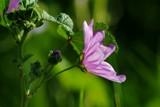 Purple flower by elektronist, photography->flowers gallery