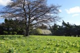 A Drive In The Country - Daffodils by LynEve, photography->landscape gallery