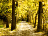 Pumpkin Patch Yellow by jojomercury, Photography->Landscape gallery