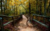 Chemin Entre Deux Barrires, De Nouveau by casechaser, photography->manipulation gallery