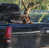 My Truck by LakeMichigan, photography->animals gallery