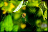 On The Hunt by corngrowth, photography->insects/spiders gallery