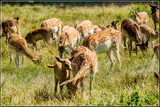 Family Dinner by corngrowth, photography->animals gallery