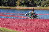 harvesting cranberries by solita17, Photography->Transportation gallery