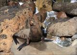 Basking Kekeno by LynEve, photography->animals gallery