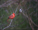 Friends Or Foes? by Jimbobedsel, photography->birds gallery