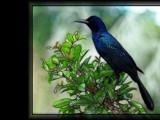 Blackbird in the Everglades 1 - rework by Hottrockin, Rework gallery