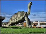 Turtle by Dunstickin, photography->sculpture gallery