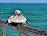 Sitting on the Dock of the Bay by SR21, Photography->Birds gallery