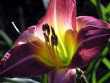 Pretty Purrrrrrrrrple! by marilynjane, Photography->Flowers gallery