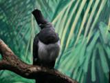 White Bellied Go Away Bird by Anita54, Photography->Birds gallery