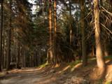 Golden hour by ekowalska, photography->landscape gallery