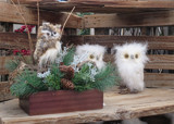 Little Hoots by Jimbobedsel, holidays->christmas gallery