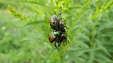 Love Bugs by muzikIsMEDS, photography->insects/spiders gallery