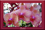 Orchids Galore by slow_2gojoe, Photography->Flowers gallery