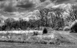 A Local Nature Area_B&W by tigger3, contests->b/w challenge gallery