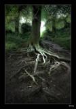 Treefingers #2 by Sivraj, photography->landscape gallery