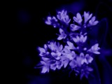 For lack of a better name by isaacp, Photography->Macro gallery