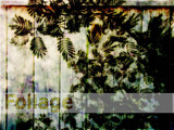 Foliage by sunnymay, Photography->Manipulation gallery