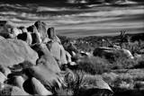 California Rock Garden by snapshooter87, photography->gardens gallery