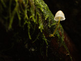 Lil Sou Wester by mayne, Photography->Mushrooms gallery