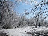 Ice Storm that hit Cape Girardeau Missouri by theevilpenguin, Photography->Landscape gallery
